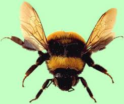 This is what a Bee looks like