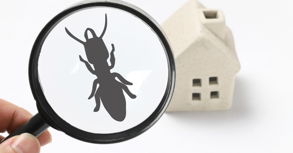 Termite Inspection NJ